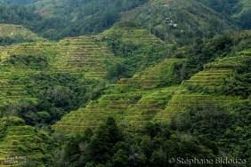 banaue-terrace-field-rice