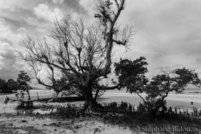 arbre-sinistre-siquijor-cauchemar