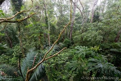 jungle-tree-bandilaan-siquijor