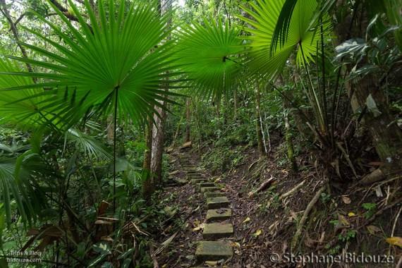 bandilaan-path-viewpoint