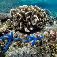 Moalboal, un haut lieu de snorkeling sur l'ile de Cebu