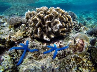 etoile-mer-bleue-philippines