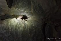 Une grenouille vivant dans l'obscurité de la grotte