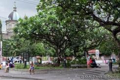 intramuros-manille-arbre