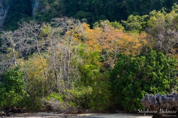 Koh Phak Bia-ile-thailande