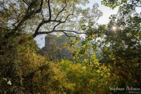 hiver-saison-thailande-arbre