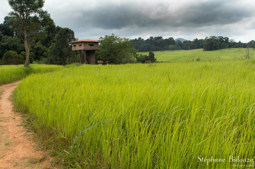 tour-observation-khao-yai