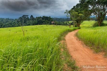 Khao Yai, le plus vieux parc national de Thailande