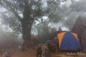brume-brouillard-foret-camping-chiang-dao-thailande