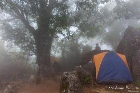 brume-brouillard-foret-camping-chiang-dao-thailande
