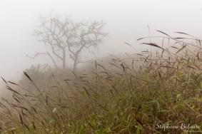 brume-brouillard-prairie-chiang-dao