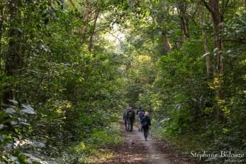 forêt-vietnam-halong-along
