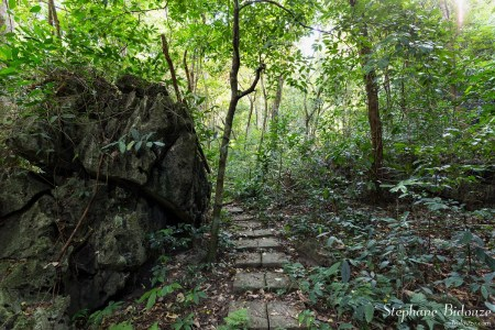 jungle-chemin-cat-ba-parc-national-vietnam