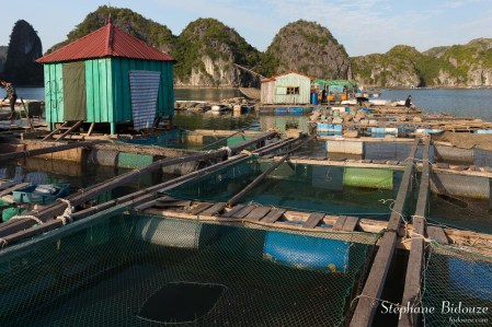 halong-along-baie-ferme-piscicole-poisson-elevage
