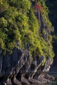 bambou-falaise-Lan-Ha-baie