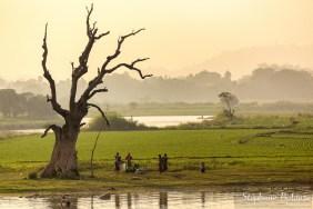arbre-mort-solitaire-ubein-amarapura