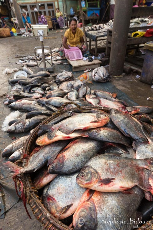 marché-poisson-mandalay-myanmar