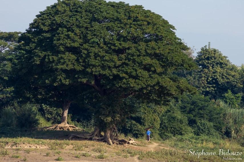 arbre-irrawaddy-homme-birmanie