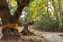 arbre-ruban-bouddha