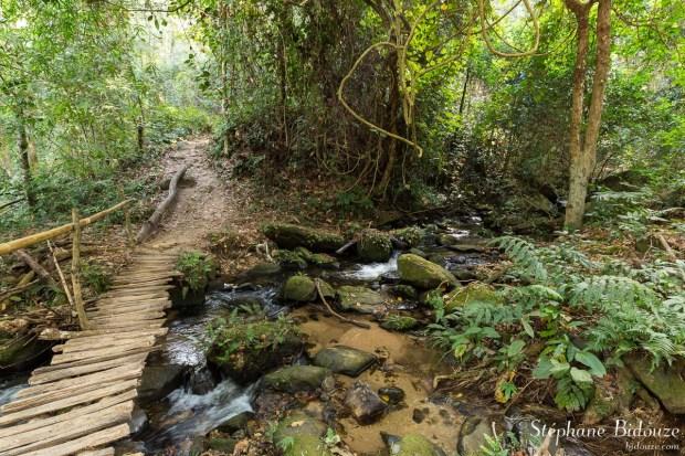 chemin-jungle-rivière-inthanon-thailande-foret