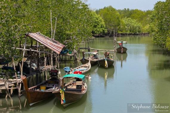 mangrove-ko-lanta-