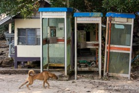 chien-cabine-telephone-thailande