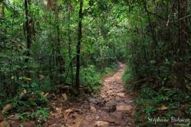forêt-ko-kood-
