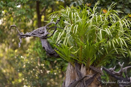 dragon-sculpture-bois-trempé-trang