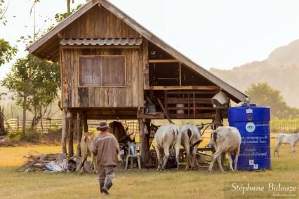 ferme-thailande-kanchanaburi