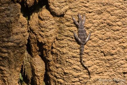 varan-reptile-thailande
