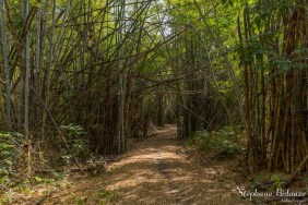 bambou-foret-kanchanaburi