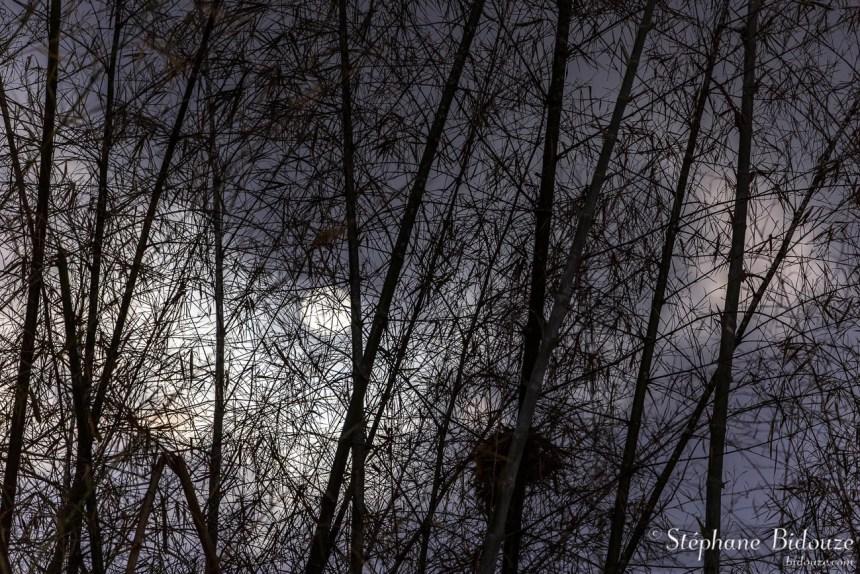 bambou-lune-pleine-poesie-thailande