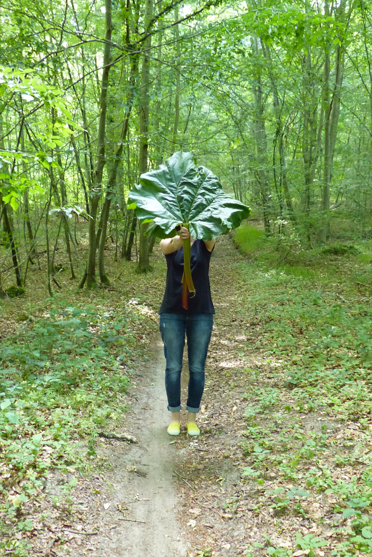 Rhubarbe-Bidule-et-Cocotte