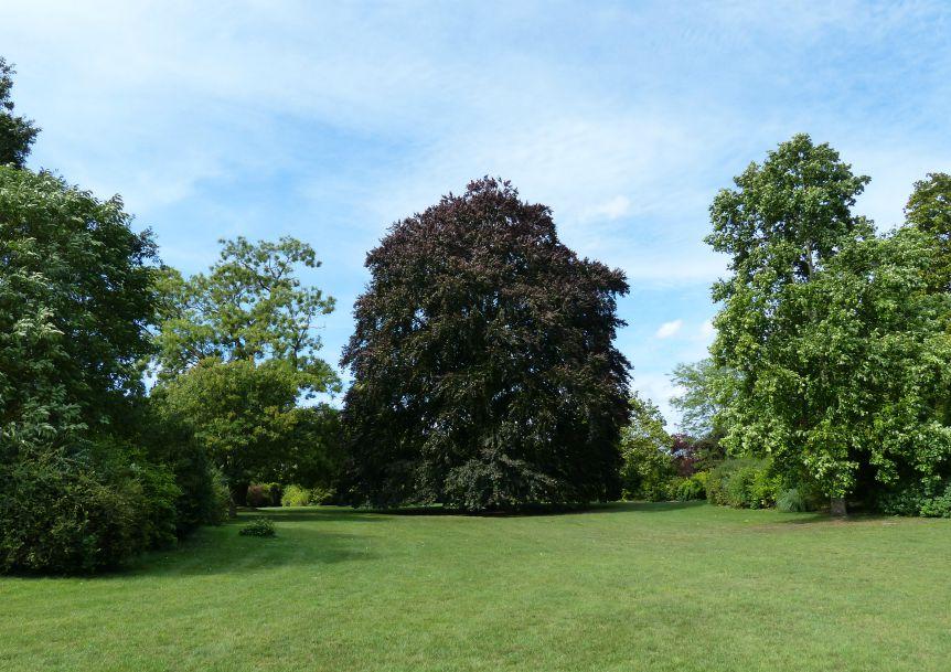 Parc du palais de compiegne - arbre centenaire