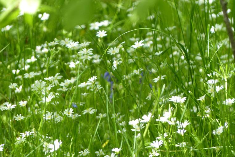 Perlanesse-fleurs