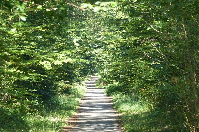 Balade-à-vélo-en-forêt-de-compiegne-5