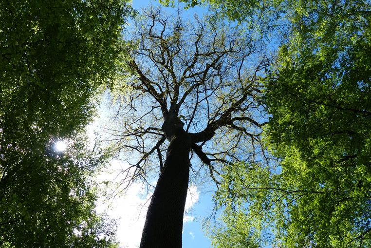 livre-un-arbre-pour-ami-gallimard-jeunesse-3