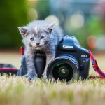 Pet Photography Tips Ideas For Your Cat Dog Photoshoot Bidun Art