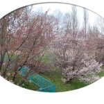 聖台公園 2