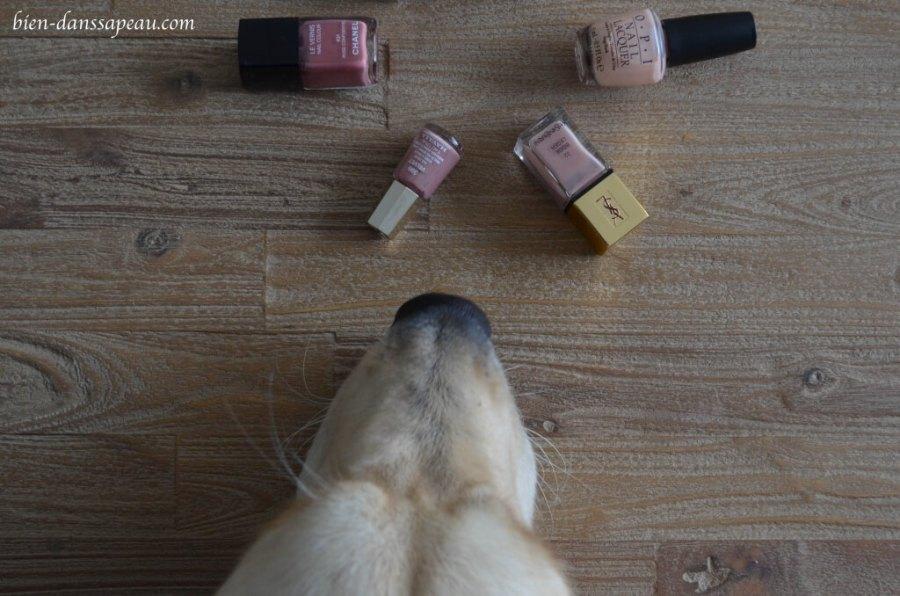 intégrer-son-chien-dans-sa-famille-blog-essentiels
