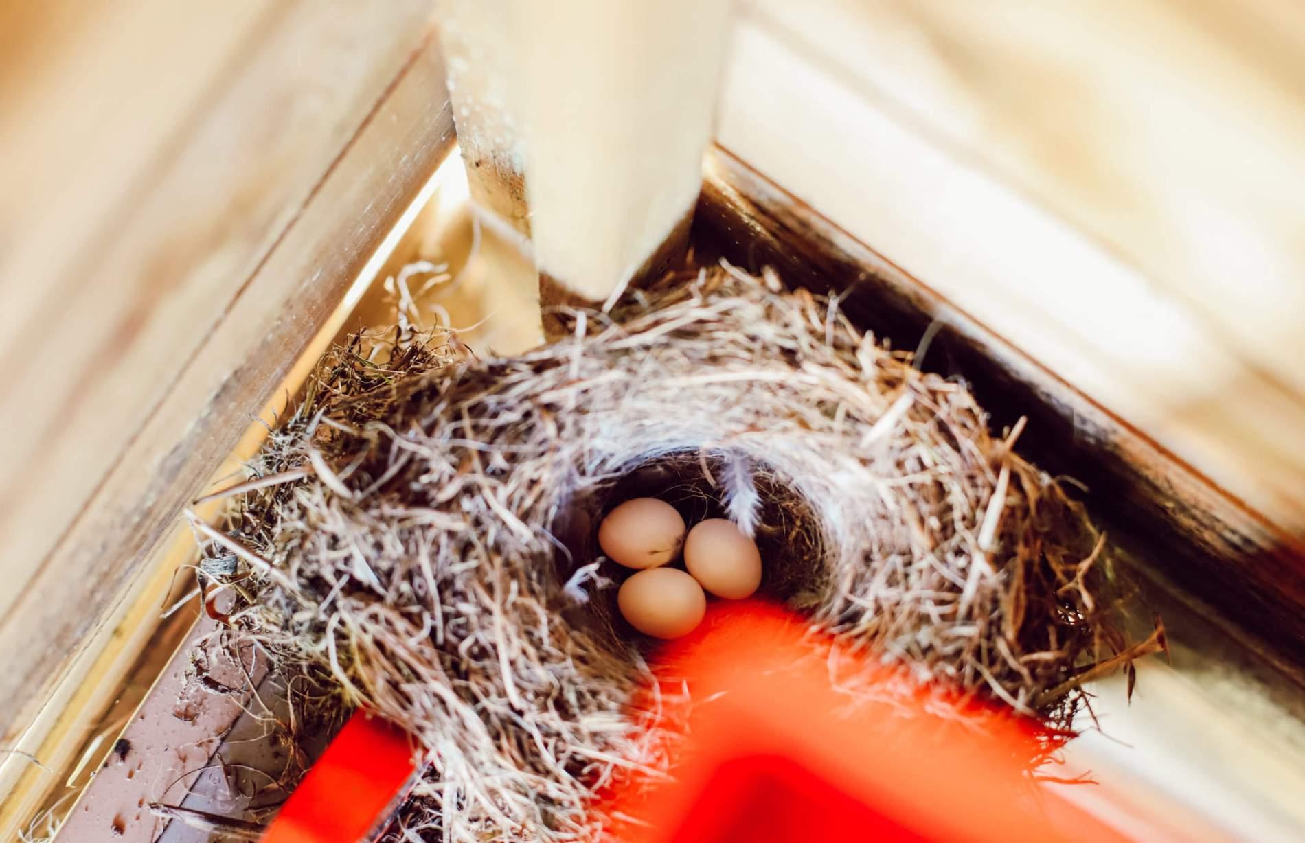 sérendipité-nid-oiseaux