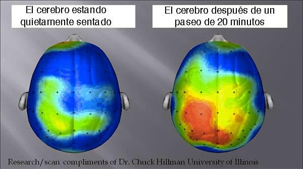cerebro ejercicio 20 minutos