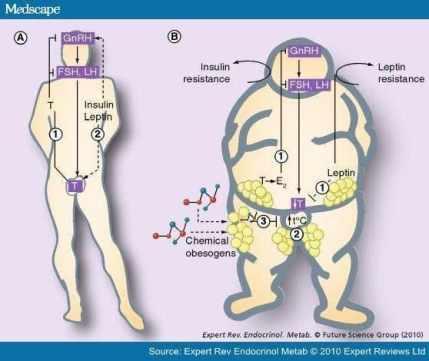 consecuencia bioquímica de los obesógenos