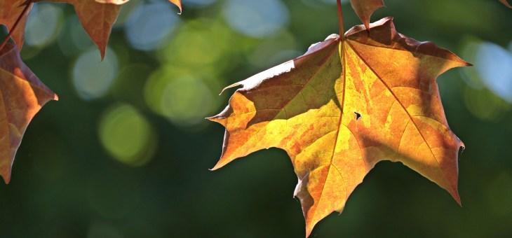 Boostez votre corps pour la rentrée, et préparez l'automne !