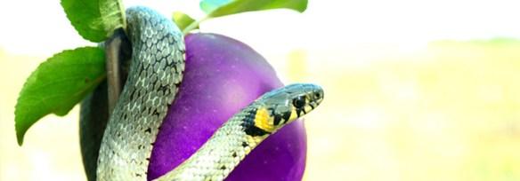 comentario-bereshit-genesis-3-4-5-tentacion-serpiente