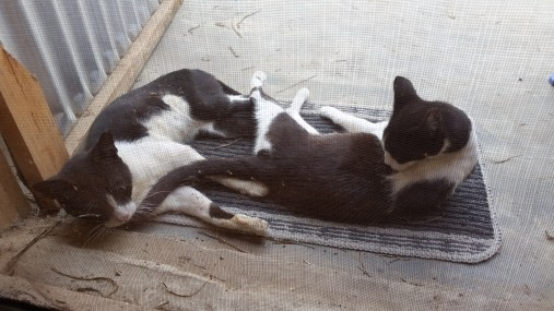 My cats, Baxter and Acadia, relaxing on the back porch