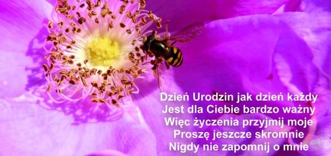 Bacia_2011_ur