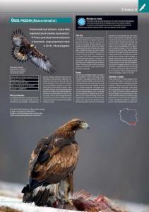 encyklopedia_ptakow_2015_3