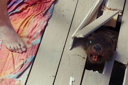 Zombie-Beaver-MAIN