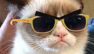 Grumpy cat wearing sunglasses